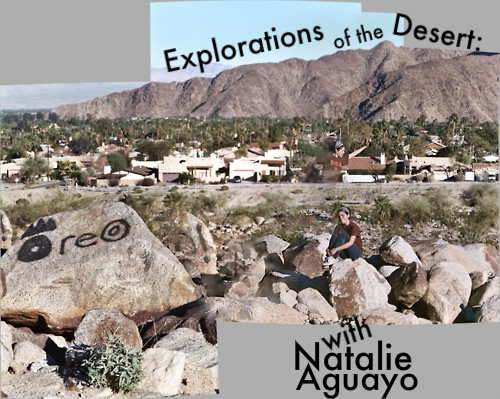 explorations of the desert