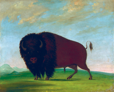 George Catlin, Buffalo Bull, Grazing on the Prairie, 1832-1833, oill on canvas, © Smithsonian American Art Museum, Gift of Mrs. Joseph Harrison, Jr.