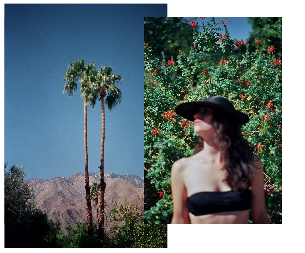 http://seeingacameravomit.tumblr.com/post/67377487478/palm-springs-visual-diary-no-4